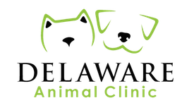 Veterinarians Beaumont | Delaware Animal Clinic